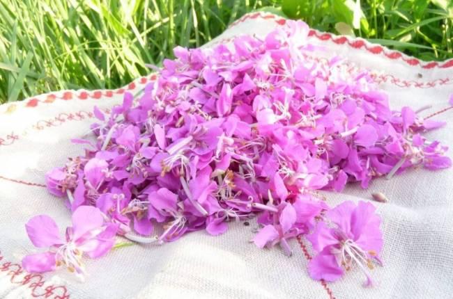 2ЦветыСвежесобранные-цветы-кипрейного-растения.jpg