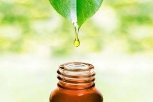 Особенности-масла-чайного-дерева-300x200.jpg