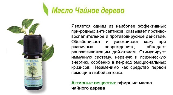 maslo-chajnogo-dereva-3.jpg