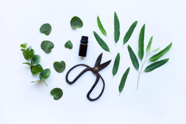 tea-tree-oil-for-hair-900x600.jpg
