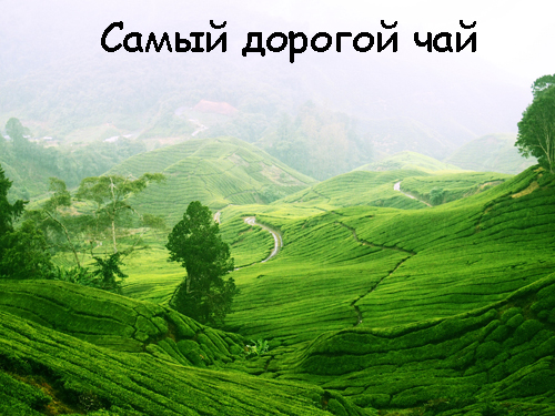 1362130149_samyy-dorogoy-chay-v-mire.jpg