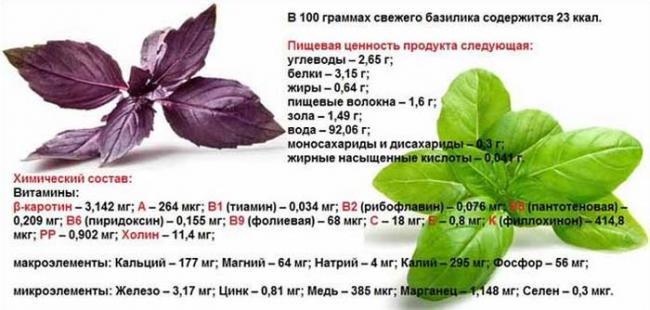 bazilik_himichesky_sostav.jpg