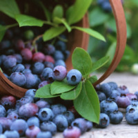 Blueberry-2-200x200.jpg
