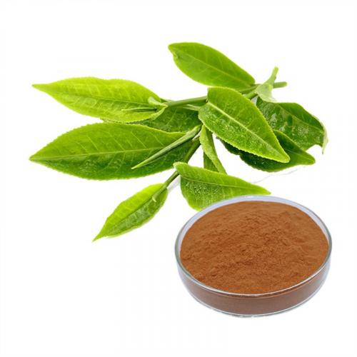 Organic-Green-Tea-Extract-High-Quality-l.jpg