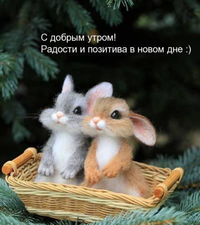 dobrogoutra_ru_3644.jpg
