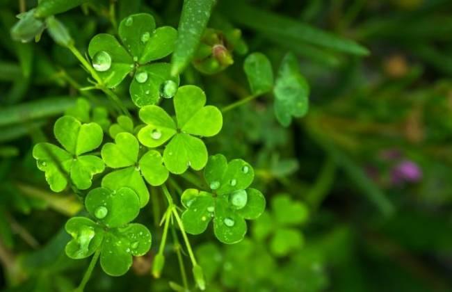leaf-1679736_960_720-e1512408680805.jpg