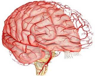 sosudy-mozga.jpg