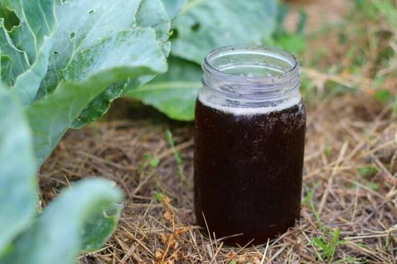 compost-tea.jpg