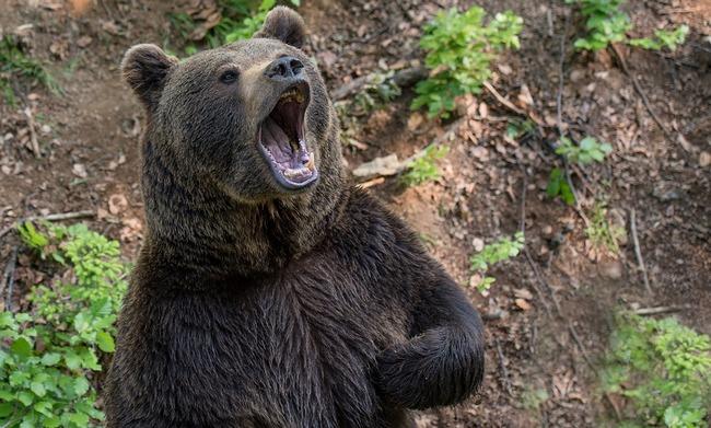 bear-3400641_960_720.jpg