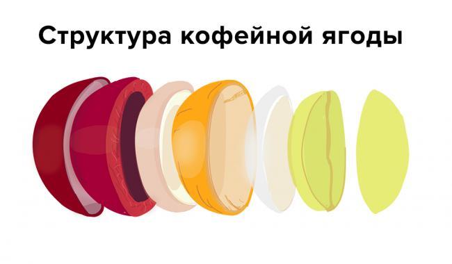 coffeestructure.jpg