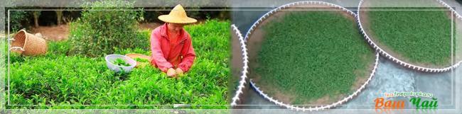 tea_green_make2.jpg
