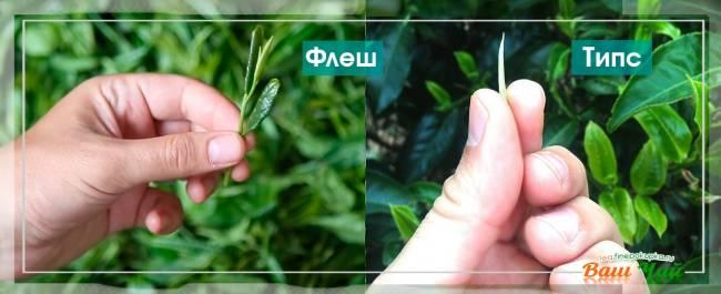 tea_green_make5.jpg