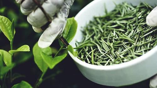 cn1rhab_green-tea-extract_625x300_26_March_19.jpg