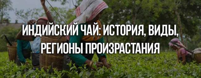 indiyskiy_chay_istoriya_vidi_regioni_proizrastaniya_1280x500.jpg
