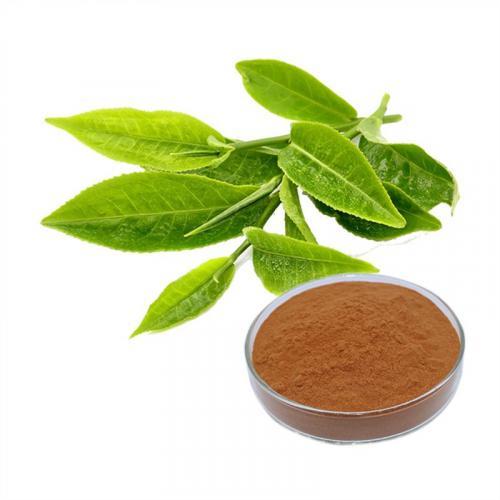 Organic-Green-Tea-Extract-High-Quality-l.jpg