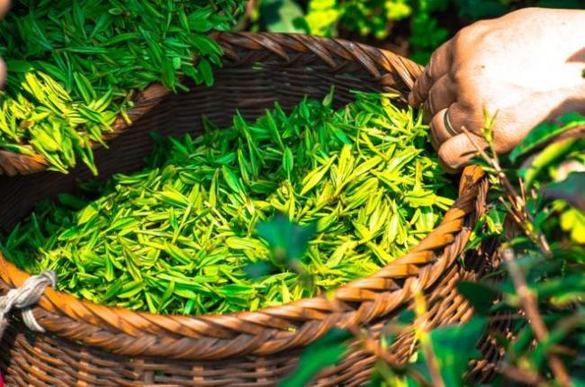 tea-1309015_960_720-e1515571122504.jpg
