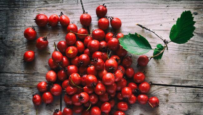 Hawthorne-Berries-e1514141576836.jpg