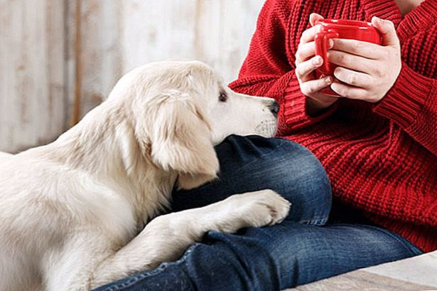 what-can-happen-if-a-dog-drinks-coffee-1.jpg