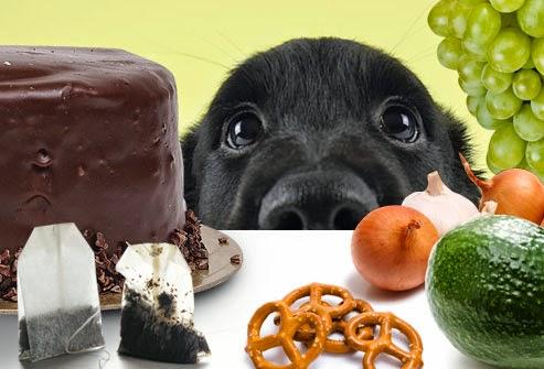 bad-dog.jpg