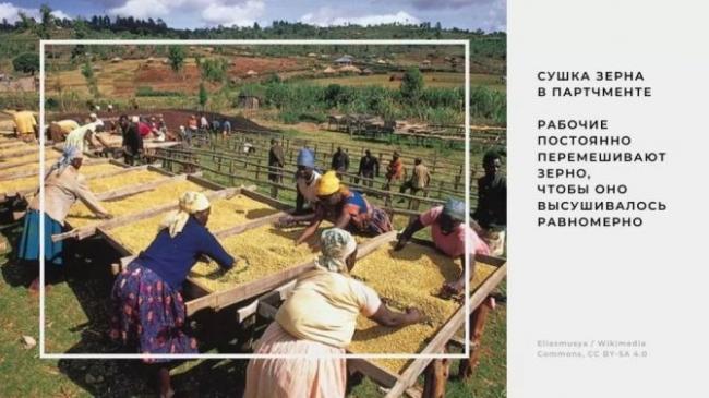 sushka-zerna-v-partchmente-na-pripodnyatyh-stolah-tak-nazyvaemyh-afrikanskih.jpg