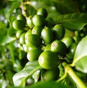 zelenyl-kofe-dlya-pohudeniya-297x300.jpeg