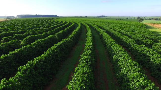 coffee-plantation.png