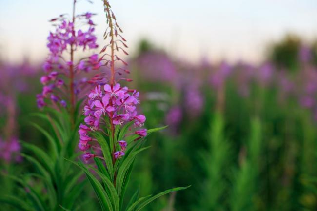 1Период-цветенияАнешний-вид-растения.jpg