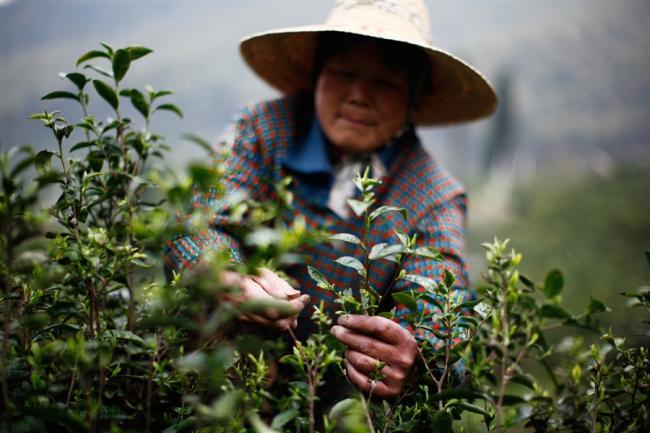 pb-120409-china-tea-plantation-nj-01.photoblog900.jpg
